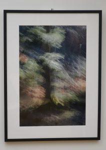 DSC08824 212x300 - Andreja Peklaj: Domovanje skrivnosti - odprtje fotografske razstave