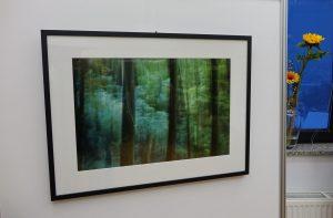 DSC08830 300x197 - Andreja Peklaj: Domovanje skrivnosti - odprtje fotografske razstave