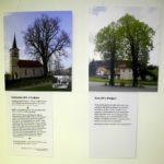 lipe3 150x150 - Zgodbe naših lip - otvoritev razstave študijskega krožka