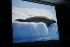 DSC01274 resize kopija 300x200 - Peter Hribar: Antarktika - predavanje