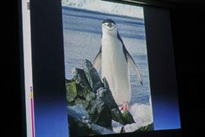 DSC01276 resize kopija 300x200 - Peter Hribar: Antarktika - predavanje