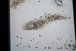 DSC01277 resize kopija 300x200 - Peter Hribar: Antarktika - predavanje