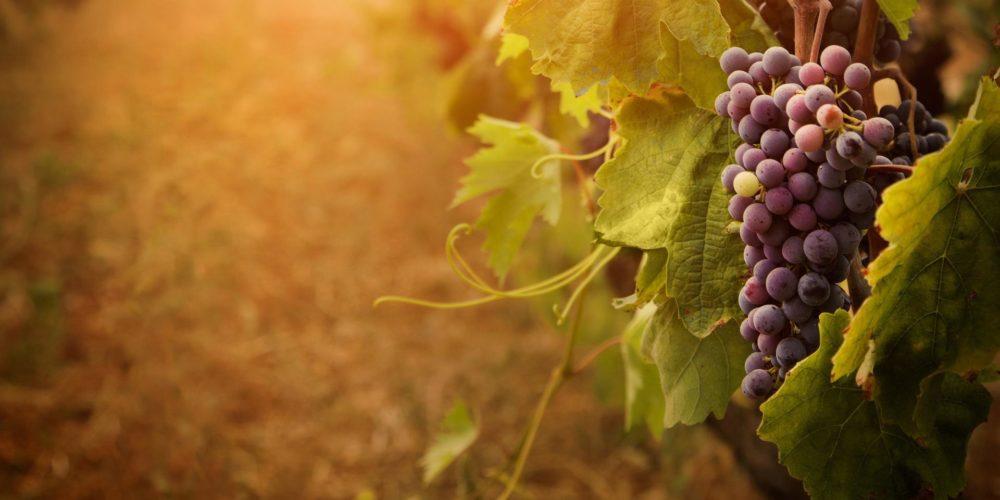 Pravljični vinotok – pravljična urica z ustvarjalno delavnico za otroke od 4. leta dalje