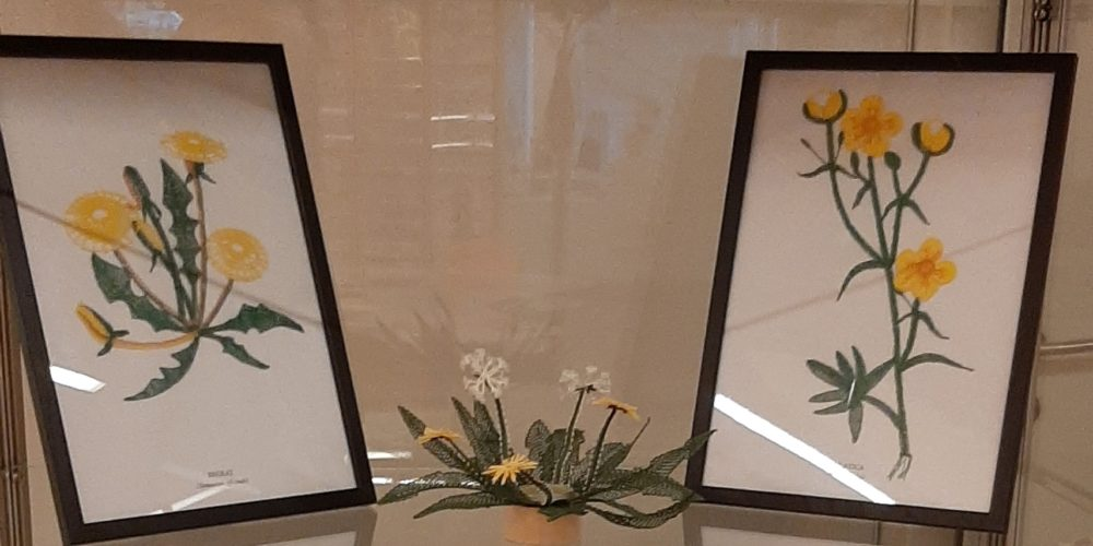 Zdravilne rastline: razstava čipk Klekljarske sekcije KD Rak Rakek